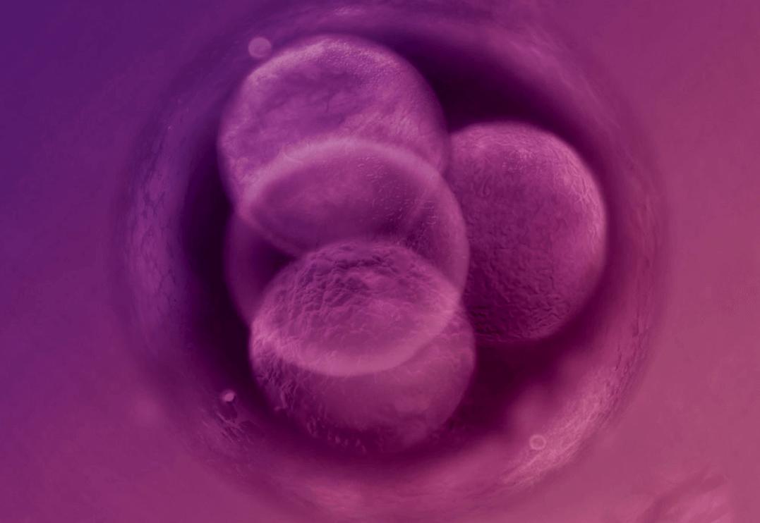 cell_fotoshop_photoshop